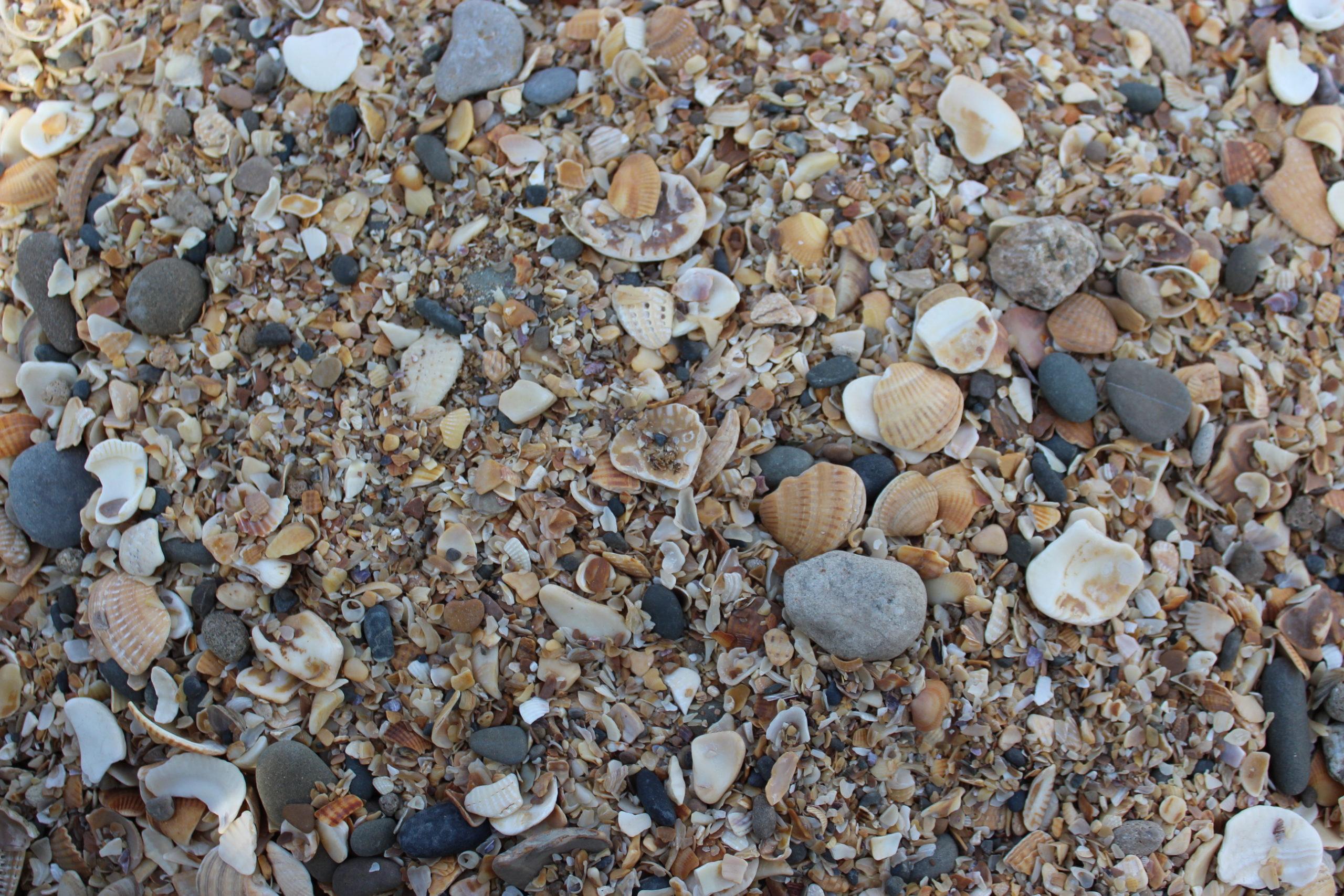 Морской песок с ракушками